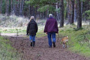 dog-walking-1070076_640 (1)